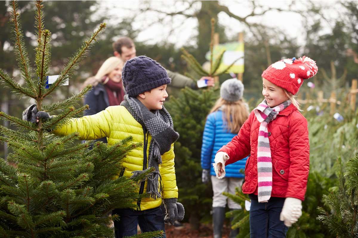 Checkliste welcher weihnachtsbaum passt zu mir ?