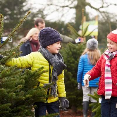 Welcher Weihnachtsbaum passt